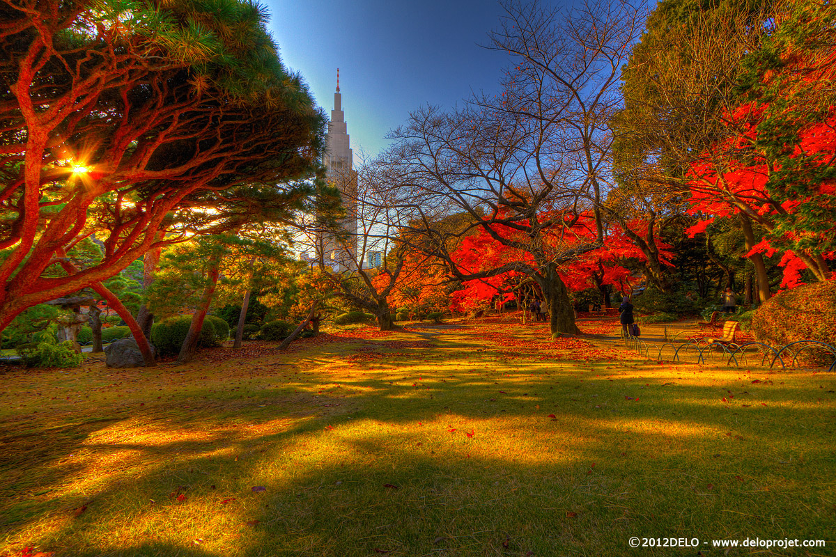 DELOPROJET | movie of Shinjuku garden in Tokyo during autumn