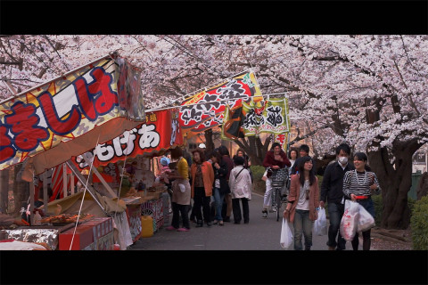 Omiya Park one of 100 best Sakura Spots in Japan