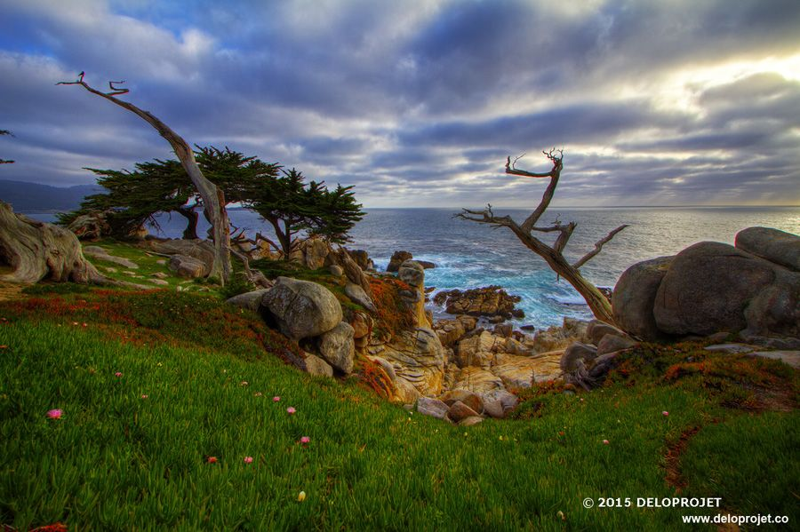 Photography of the trail Carmel-by-the-sea CA