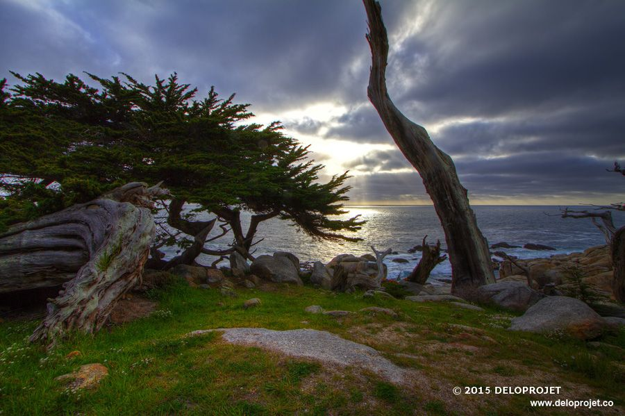 photography of walking carmel by the sea, CA