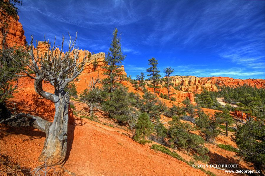 red-canyon-01