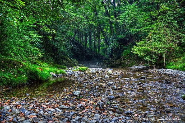 japanese-forest-01