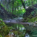 japanese-forest-02
