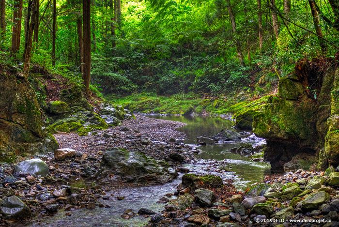 japanese-forest-04