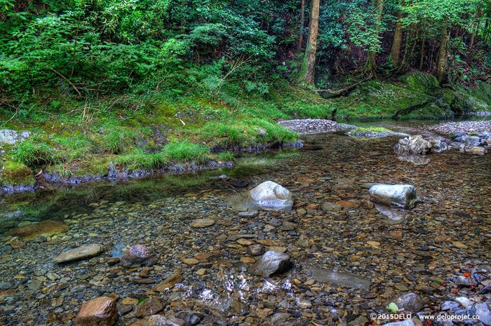 japanese-forest-05
