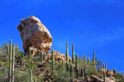 Photographies of  hiking between cactus desert