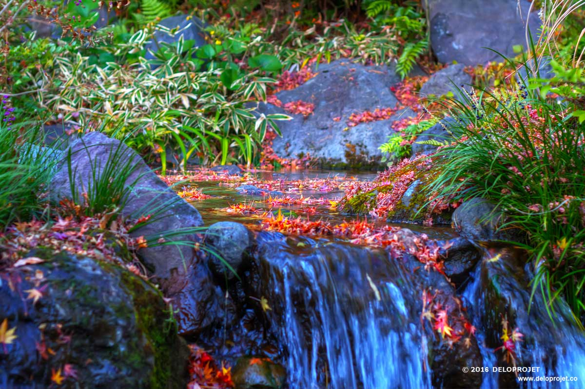 Deloprojet amazing autumn colorful leaves from japan for Japanese garden project