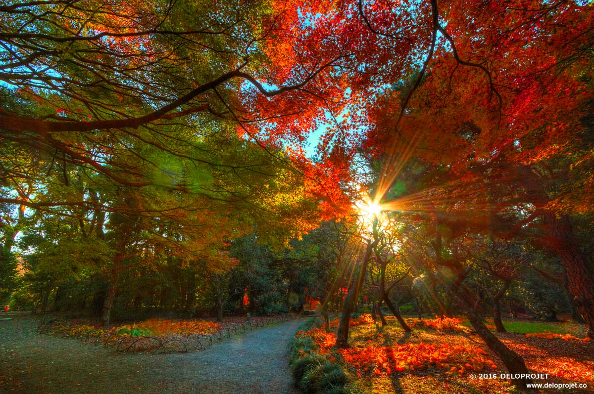 Exceptionnel Magic Fall Wedding And Sunset In Japanese Garden
