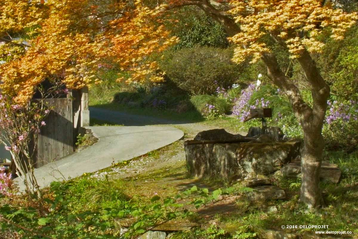 Movie of the mount Iwane azalea garden in Japan