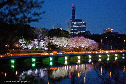 Chidorigafuchi, one of the best spot of Tokyo for sakura viewing