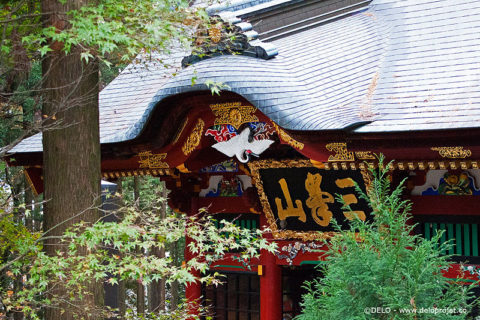 Mitsumine shrine of japanese wolf series of photography