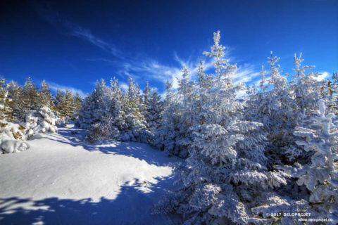 Trekking in snowy landscape of dream in Cévennes National Park
